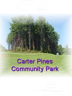 carterpinesparkPIC-1
